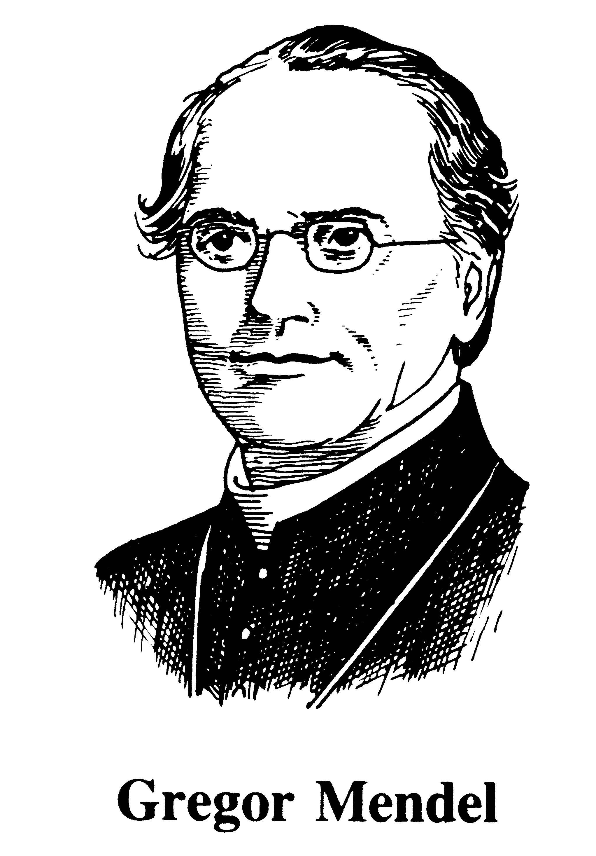 Gregor Mendel Worksheet 6 3