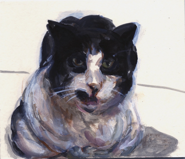 Painting an old black and white cat looking out at the viewer