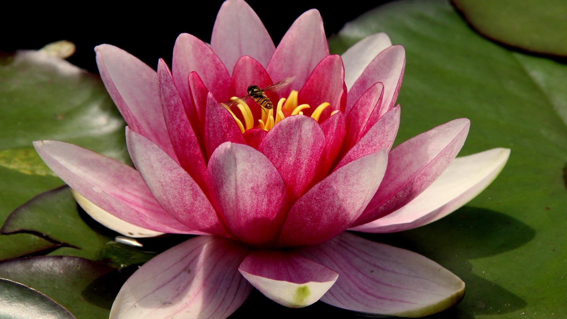Mindfulness Trainingen Bij De Zoete Geest