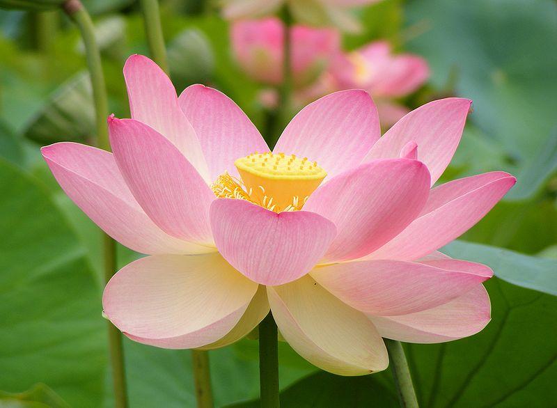 Gratis Thema avond Mindfulness 20 september