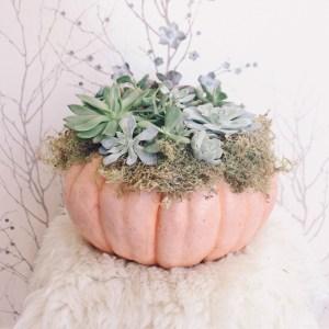 A Succulent Cinderella Pumpkin DIY