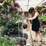 5 Secrets When Choosing Flowers from the Garden Center