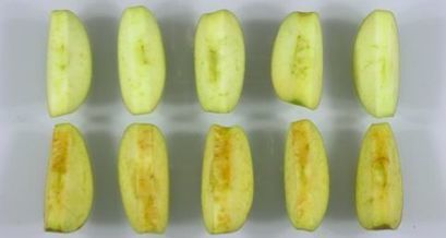 This is How We Become Zombies: U.S. Approves Biotech Apple That Resists Browning