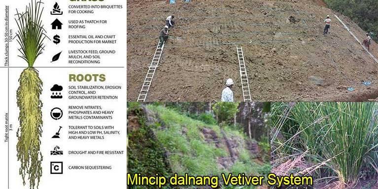 Mincip dalnang Vetiver System ~ Pau Do Lian