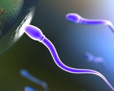 Crean esperma artificial a partir de células madre