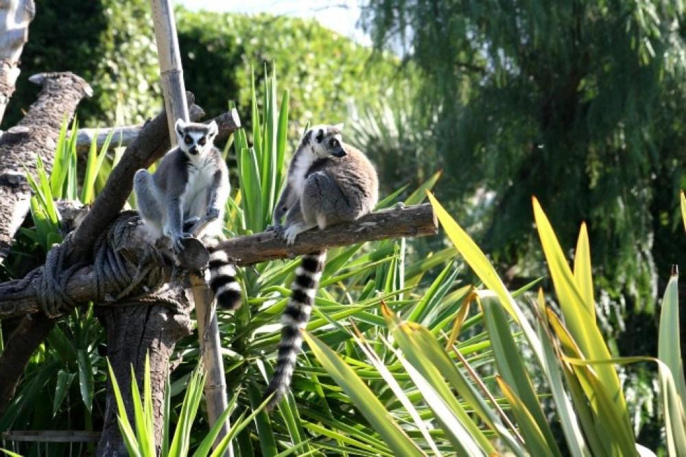 uno zoo in abruzzo