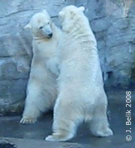 Arktos & Nanuq