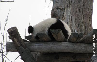 Fu Long, 16. Januar 2009