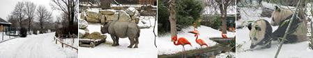 Ein tiefverschneiter Tiergarten, 31.1./1.2.2009