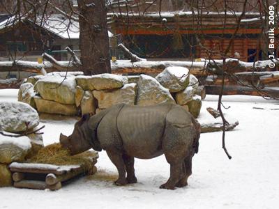 Jange im schneebedeckten Außengehege, 1. Februar 2009