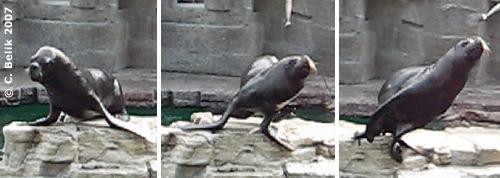 Pedro bei der Fütterung ... wenn ein Fisch geflogen kommt ..., 11. Oktober 2007