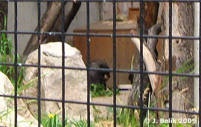 Ursons, 16. Juni 2009