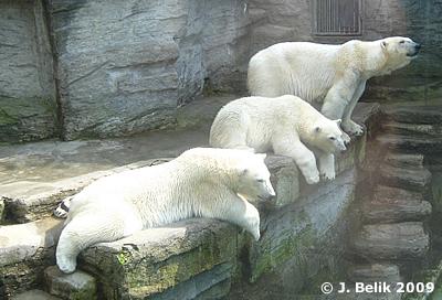 Arktos, Nanuq und Mama Olinka, 1. Juli 2009