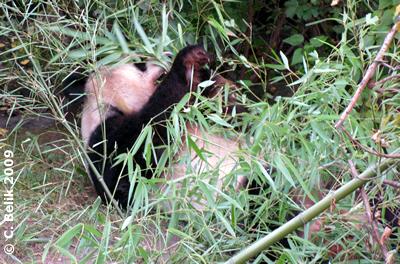 Den Long Hui vor lauter Bambus nicht sehen.