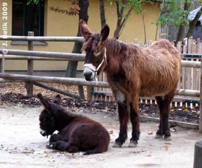 Amelie mit Mama, 30. Oktober 2009