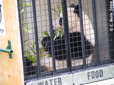 Fu Long in der Transportkiste, 16. November 2009
