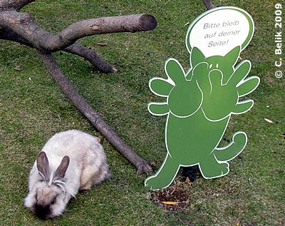 Hoppelchen wieder zurück im Kaninchenland, 26. November 2009