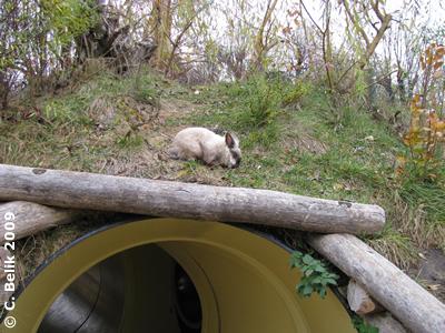 Kaninchen im Niemandsland, 16. November 2009