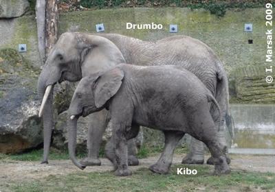 Kibo mit seiner neuen Tante Drumbo, 7. Dezember 2009