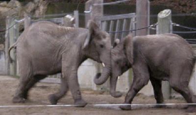 Kibo und Mongu