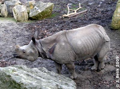 Sundari, 29. Dezember 2009