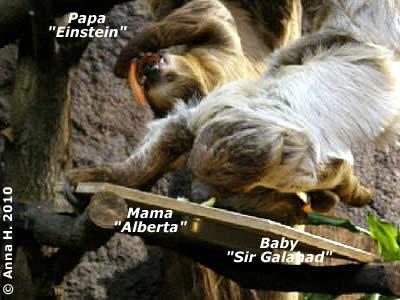 Papa Einstein, Mama Alberta und Baby Sir Galahad bei der NAchmittagsjause, 30. Jänner 2010