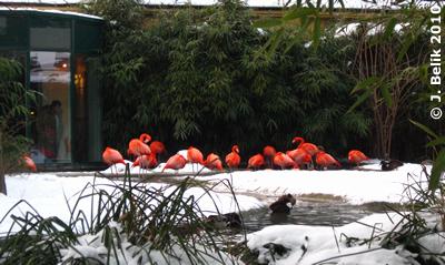 Flamingos, 22. Jänner 2010
