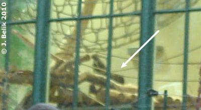 Mota (siehe Pfeil) dreht ihre Runden, 2. Jänner 2010