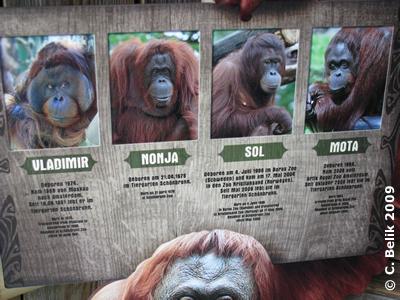 Infotafel bei den Orangs, 31. Dezember 2009