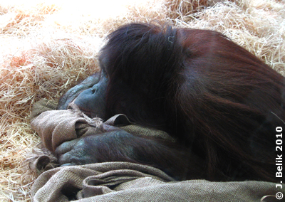 Das Warten macht sooo müde ..., Sol, 20. Jänner 2010