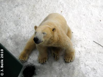 Ich tu doch eh nix! Arktos, 12. Februar 2010