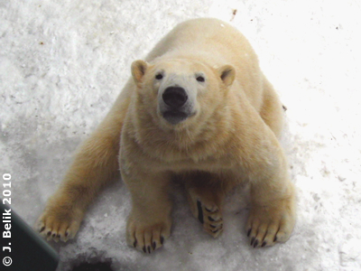 Schau mir in die Augen, Kleines! Arktos, 12. Februar 2010