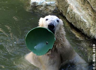 Schau, mein Lieblingsball löst sich schon auf! Arktos, 27. Februar 2010
