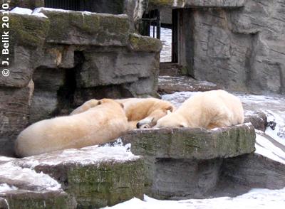 Kuscheln geht immer ..., 7. Februar 2010