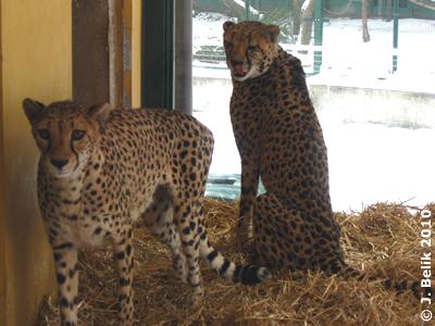 Mona und Tashani, 12. Februar 2010