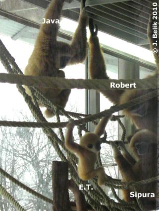 Familie Gibbon, 12. Februar 2010