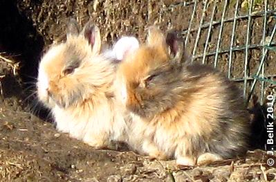 ... miteinander kuscheln ist am Schönsten, 25. Februar 2010
