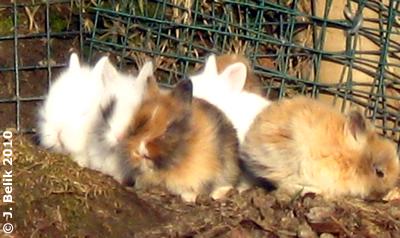 Nachwuchs im HEImtierpark: 6 entzückende Hoppelchen genießen die warmen Sonnenstrahlen, 25. Februar 2010