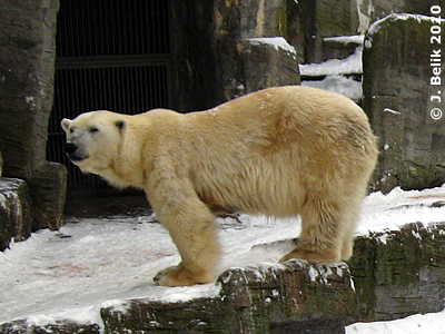 Olinka im Tiergarten Schönbrunn, 12. Februar 2010