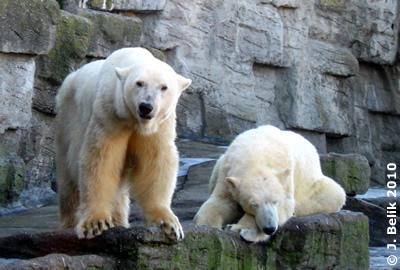 Olinka mit Sohn Nanuq, 23. Februar 2010