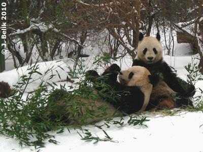 Long Hui und Yang Yang, 12. Februar 2010