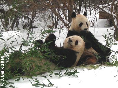 So fühl ich mich richtig wohl! Long Hui mit Yang Yang, 12. Februar 2010