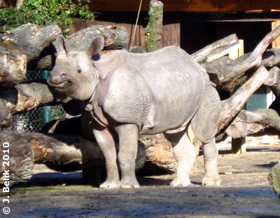 Sundari, 25. Februar 2010