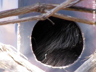 Urson in der Box, 27. Februar 2010