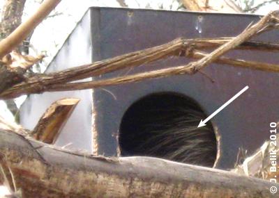 Nein, ein Urson hält keinen Winterschlaf ..., 23. Februar 2010