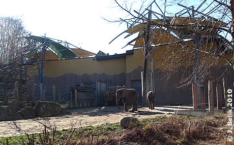 Elefantenhaus, Numbi (li), Drumbo (mitte), Kibo (re) in der Außenanlage, 3. März 2010