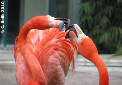 Flamingos, 28. März 2010