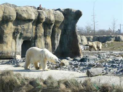 Olinka in Rotterdam, im Hintergrund beobachtt Eric aufmerksam die 9. März 2010 (Foto: Diergaarde Blijdorp / Zoo Rotterdam)