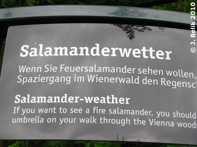 Info-Tafel zum Salamanderwetter, 19. Mai 2010