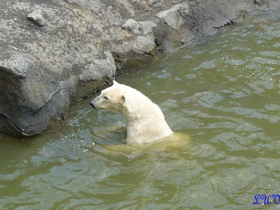 Arktos oder Nanuq? 24. Mai 2010